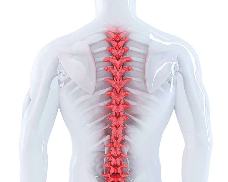 Why is the spinal cord so important?